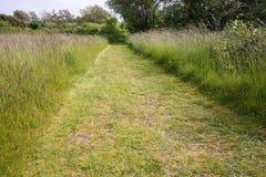 Trayectoria de la hierba verde Fotografía de archivo libre de regalías