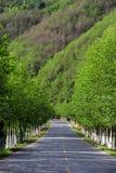 Trayectoria de la montaña con los árboles en ambos lados fotografía de archivo