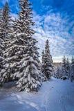 Trayectoria de la montaña del invierno en el bosque Fotos de archivo libres de regalías