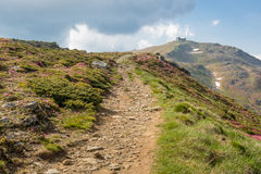Trayectoria de la montaña a través del valle floreciente del rododendro a Pip Ivan m foto de archivo libre de regalías