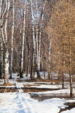Trayectoria de la nieve en bosque de la primavera Foto de archivo