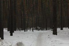 Trayectoria de la nieve en el bosque 30547 del invierno foto de archivo libre de regalías