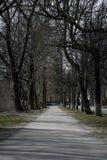 trayectoria de la primavera en el parque entre los árboles desnudos contra el cielo foto de archivo libre de regalías