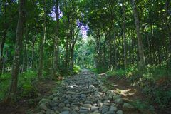Trayectoria de la roca en el bosque Imagenes de archivo