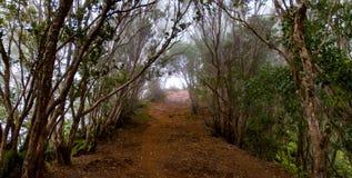 Trayectoria de la selva Imagen de archivo libre de regalías