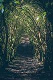 Trayectoria de la selva fotos de archivo libres de regalías