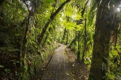 Trayectoria de la selva del nube-bosque de Costa Rican imagenes de archivo