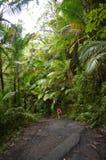 Trayectoria de la selva tropical del EL Yunque Fotos de archivo libres de regalías