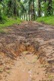 Trayectoria de la suciedad del país a través del bosque con fango y charcos grandes después de la lluvia Imágenes de archivo libres de regalías