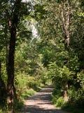 Trayectoria de la suciedad en el bosque Fotos de archivo