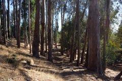 Trayectoria de la suciedad que entra abajo en bosque seco en Berkeley Fotos de archivo libres de regalías