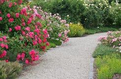 Trayectoria de las rosas en jardín hermoso Fotografía de archivo