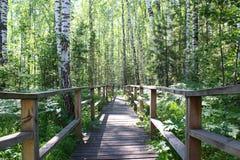 Trayectoria de madera en el bosque Fotografía de archivo