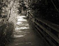 Trayectoria de madera en el bosque en blanco y negro Fotografía de archivo
