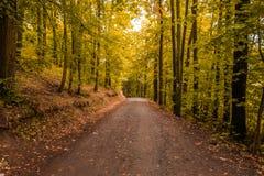 Trayectoria de madera en los colores del otoño Imagenes de archivo