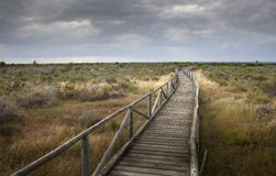 Trayectoria de madera en tierra plana al horizonte Imágenes de archivo libres de regalías