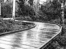 Trayectoria de madera estrecha en el bosque Fotografía de archivo
