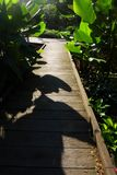 Trayectoria de madera, jardín tropical, luz del sol Fotografía de archivo libre de regalías
