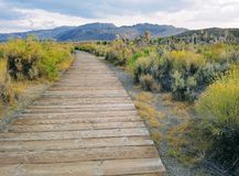 Trayectoria de madera larga en el prado amarillo del arbusto Fotos de archivo libres de regalías