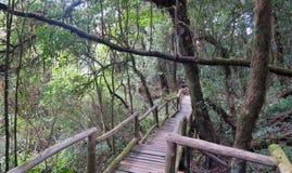 Trayectoria de madera que pasa a través de la selva Fotos de archivo libres de regalías