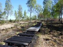 Trayectoria de madera quemada, Lituania Imagen de archivo