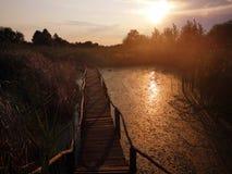 Trayectoria de madera sobre el pantano en la puesta del sol imagenes de archivo