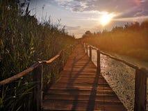 Trayectoria de madera sobre el pantano en la puesta del sol imagen de archivo libre de regalías