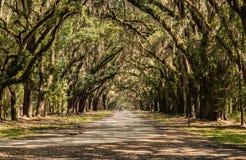 Trayectoria de Oaktree de la plantación de Wormsloe Fotografía de archivo