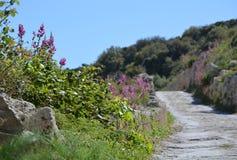 Trayectoria de piedra de la flor al cielo Foto de archivo libre de regalías