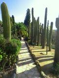 Trayectoria de piedra en el parque de cactus cactus espinoso enorme en el aire abierto en un día soleado fotos de archivo