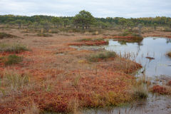 Trayectoria de Riisa en el pantano de Sooma Imágenes de archivo libres de regalías