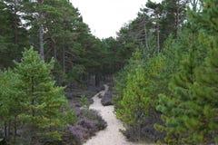 Trayectoria de Sandy a través del bosque de Culbin, Moray, Escocia Imagen de archivo libre de regalías