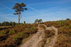 Trayectoria de Sandy a través de un bosque conífero en un día soleado brillante imagen de archivo libre de regalías