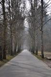 Trayectoria debajo de los árboles Fotografía de archivo libre de regalías