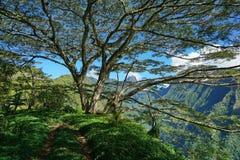 Trayectoria debajo de un árbol grande Tahití Polinesia francesa imagen de archivo libre de regalías