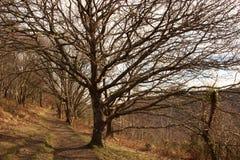 Trayectoria del árbol Imagen de archivo libre de regalías