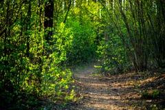 Trayectoria del alza del bosque en primavera Foto de archivo libre de regalías