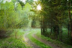 Trayectoria del camino del campo a través de la primavera Forest Under Sunset Sunbeam Foto de archivo