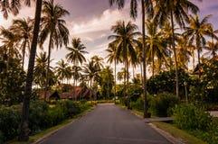 Trayectoria del camino junto con la palmera con el fondo crepuscular Fotografía de archivo
