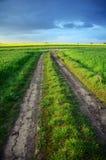 Trayectoria del camino y campo verde de la avena Imagen de archivo libre de regalías