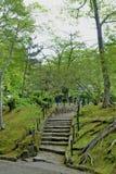 Trayectoria del carril de la calzada con los árboles verdes en Forest Beautiful Alley In Fotografía de archivo libre de regalías