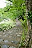 Trayectoria del carril de la calzada con los árboles verdes en Forest Beautiful Alley In Fotos de archivo libres de regalías