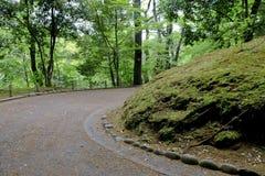 Trayectoria del carril de la calzada con los árboles verdes en Forest Beautiful Alley In Fotografía de archivo