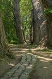 Trayectoria del cuento de hadas en un bosque con el sol que brilla a través Imagenes de archivo