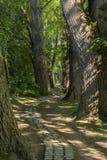 Trayectoria del cuento de hadas en un bosque con el sol que brilla a través Fotografía de archivo libre de regalías
