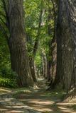 Trayectoria del cuento de hadas en un bosque con el sol que brilla a través Fotos de archivo