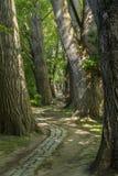 Trayectoria del cuento de hadas en un bosque con el sol que brilla a través Foto de archivo