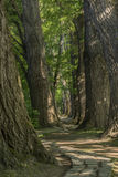Trayectoria del cuento de hadas en un bosque con el sol que brilla a través Fotos de archivo libres de regalías
