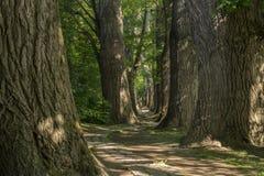 Trayectoria del cuento de hadas en un bosque con el sol que brilla a través Fotografía de archivo