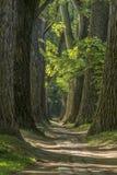 Trayectoria del cuento de hadas en un bosque con el sol que brilla a través Imagen de archivo libre de regalías